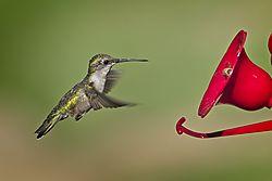 20170813_Hummingbirds_0.jpg