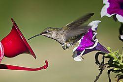 20170813_Hummingbirds_01.jpg