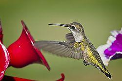 20170813_Hummingbirds_05.jpg