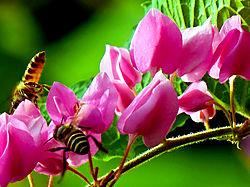 Bees_Over_Honolulu.jpg