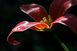 Blume2.jpg