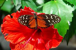 Butterfly-32.jpg