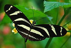 Butterfly-51.jpg