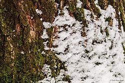 DSC_3254_tree_moss_snow_c_01.JPG