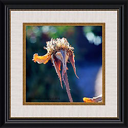 DSC_6166_framed.jpg