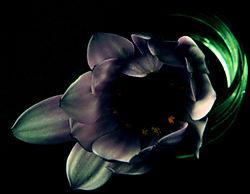 Fantasy_Flower.jpg