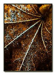 Frost-Leaf.jpg