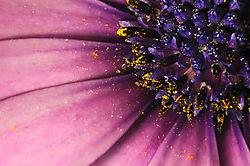 Generating_Pollen.jpg
