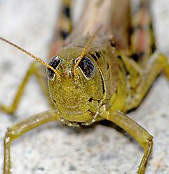 Grasshopper-web.jpg
