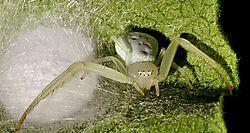 Green_Spider_7-2011-1.jpg