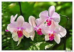Hawaiian_Flowers_6_low_res.jpg