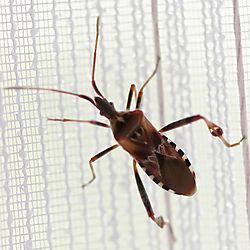Insekt-.jpg