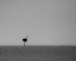 Namibia_rated-230.jpg