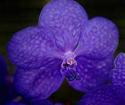 OrchidGnome1_sm.jpg