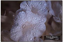 Purple_Flower_IR_100.jpg