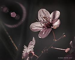 Sunlit_Blossum-67.jpg