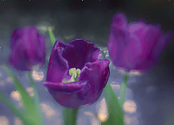 Tulip_Vignette_Impression_6.jpg
