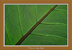 Turn_a_new_leaf.jpg