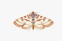 back_lit_moth.jpg