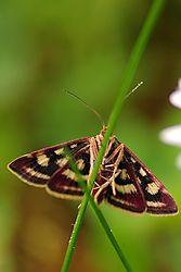 butterfly82.jpg