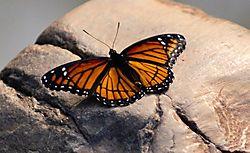 butterflyedited2.jpg