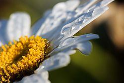 daisy_m_.jpg