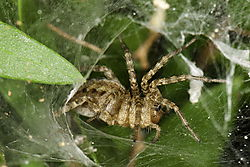 email_D3X_spider_macro_DSC_0024_1_of_1_.jpg