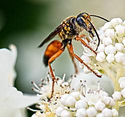 wasp-3.jpg