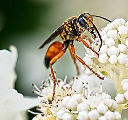 wasp-3_small.jpg