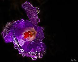 wildflower_1.jpg