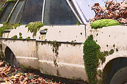 Moss-play.jpg