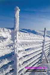 Reindeer_fence.jpg
