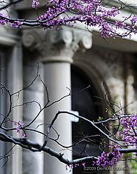 DSC_2386_Purple_Ionic_C.jpg