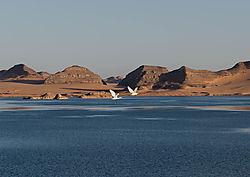Heron_s_heading_north_at_sunset_Lake_Nasser_Egypt_November_2014.jpg