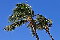 Palms1.jpg
