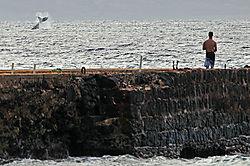 Whale-tail1.jpg