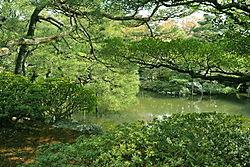 emeraldtrees.jpg