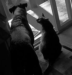jj-kiki-at-door-bw.jpg