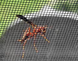 wasp-on-screen-II.jpg