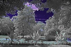 GARDEN_BLUE.jpg
