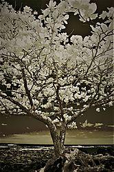 TREE_1518C.jpg