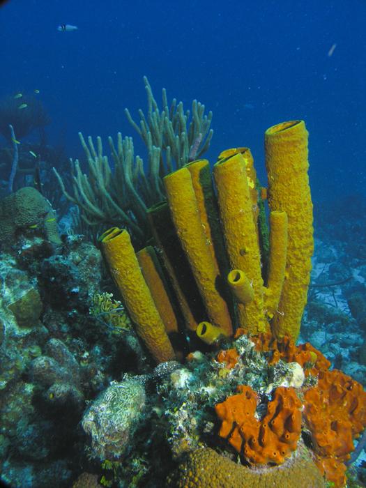 coraltubes
