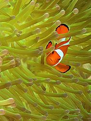 1_Favorite_Nemo.jpg