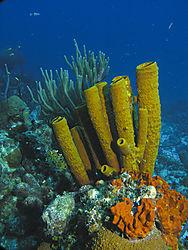 coraltubes.jpg