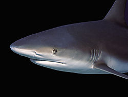 sharkportrait2.jpg