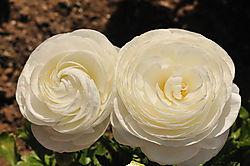 FlowerFields002small.jpg