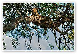 Hwange_Leopard.jpg
