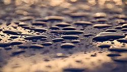 After_the_Rain-1640.jpg