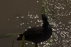 bird18.jpg