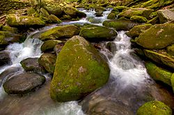 mossy_rocks_and_water.jpg